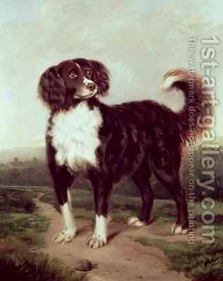 Spaniel by J.W. Morris - Reproduction Oil Painting