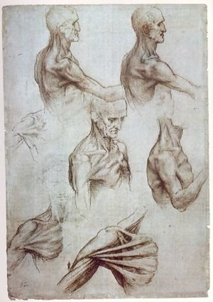 Reproduction oil paintings - Leonardo Da Vinci - Muscles of the neck and shoulders 1515
