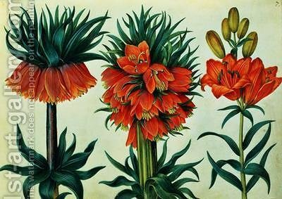 Crown Imperial Lily by Alexander Marshal - Reproduction Oil Painting