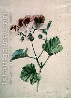 Geranium by - Marie-Anne - Reproduction Oil Painting