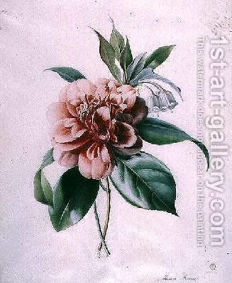 Camellia by - Marie-Anne - Reproduction Oil Painting