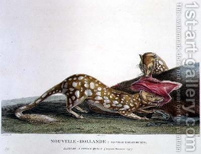 Dasyurus Macrourus a Long-Tailed Dasyure by (after) Lesueur, Charles Alexandre - Reproduction Oil Painting