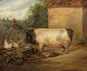 Portrait of a prize pig property of Squire Weston of Essex