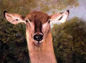 Famous paintings of Antelope: Head of an Antelope