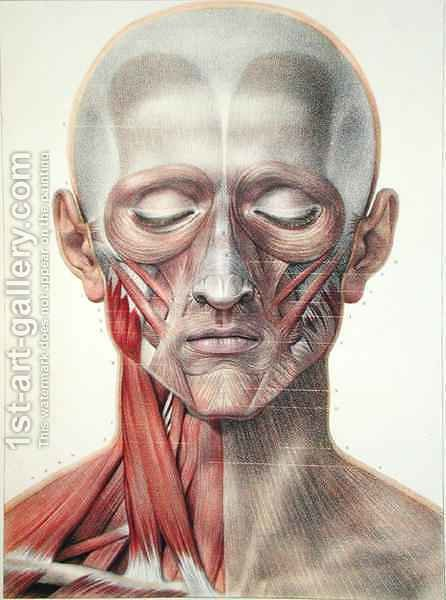 Musculature of the face 2 by (after) Jacob, Nicolas Henri - Reproduction Oil Painting