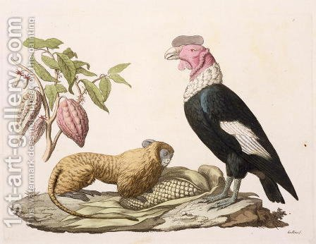 Lion monkey and condor native to Chile or Ecuador by (after) Humboldt, Friedrich Alexander, Baron von - Reproduction Oil Painting