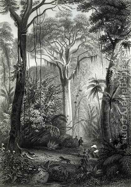 Henry George Hine: Scene in a Brazilian Forest - reproduction oil painting