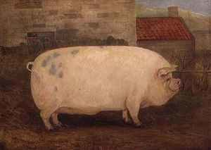 Famous paintings of Animals: Jumbo 16 months old 41 stone bred by J Young Newholm Yorkshire