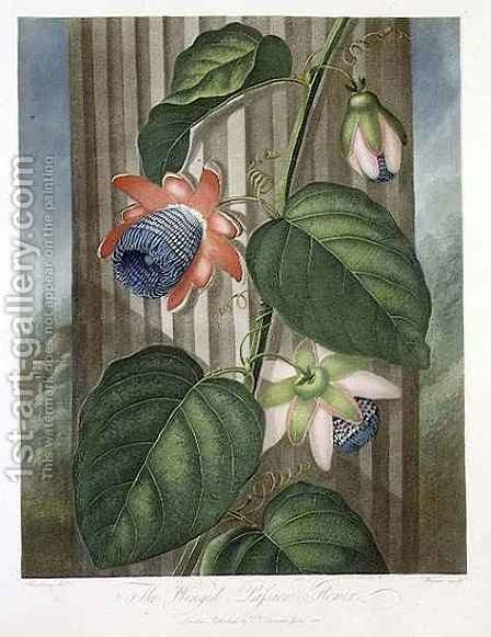 The Winged Passion Flower by (after) Henderson, Peter Charles - Reproduction Oil Painting
