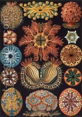 Ascidiae plate 85 from Kunstformen der Natur by Ernst Haeckel - Reproduction Oil Painting