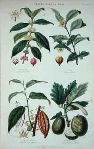 W. Fitch reproductions - Coffee Tea Chocolate and Breadfruit