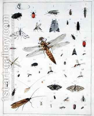 Georges Cuvier: Various insects 2 - reproduction oil painting
