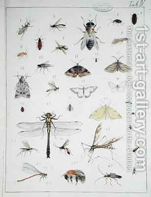 Various insects 3 by Georges Cuvier - Reproduction Oil Painting