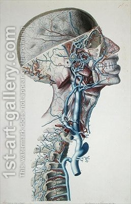 Veins and arteries in the head by (after) Chazal, Antoine - Reproduction Oil Painting