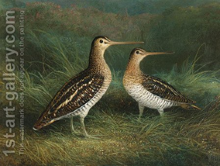 A Pair of Snipe by Abel Hold - Reproduction Oil Painting