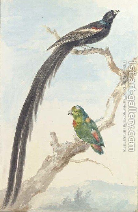 A Bird of paradise and a Parokeet by Aert Schouman - Reproduction Oil Painting