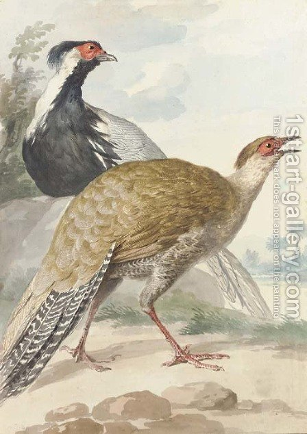 A brace of Pheasants, cock and hen by Aert Schouman - Reproduction Oil Painting