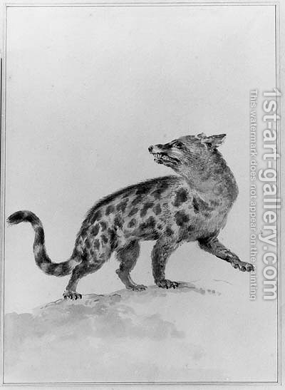 A Civet, looking backwards by Aert Schouman - Reproduction Oil Painting