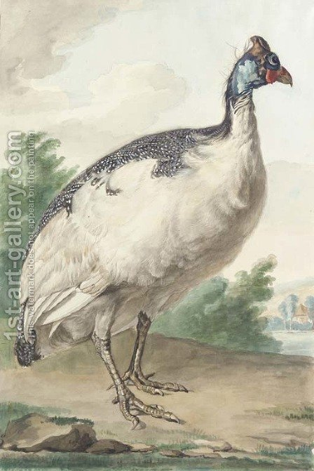 A Guineafowl by Aert Schouman - Reproduction Oil Painting