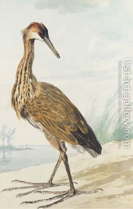 A Purple Heron on a sand bank by Aert Schouman - Reproduction Oil Painting