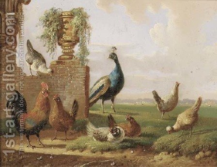 Poultry and a peacock by a ruin by Albertus Verhoesen - Reproduction Oil Painting