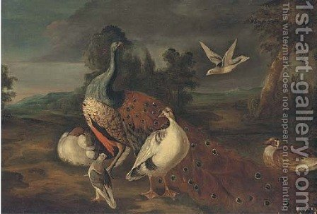 A peacock, woodpigeons and other fowl in an extensive landscape by (after) Marmaduke Cradock - Reproduction Oil Painting