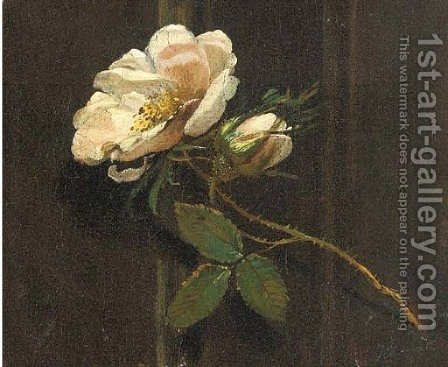 A rose by (after) Simon Pietersz. Verelst - Reproduction Oil Painting