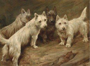Four Cairn terriers