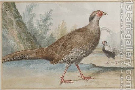 Two silver pheasants in a garden by (after) Aert Schouman - Reproduction Oil Painting