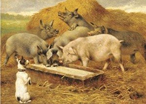 Reproduction oil paintings - Herbert William Weekes - Feeding time