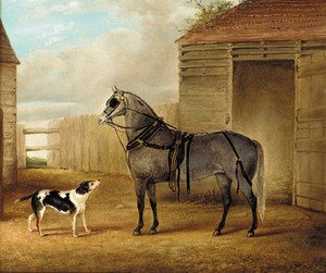 A saddled grey horse and a dog by a barn