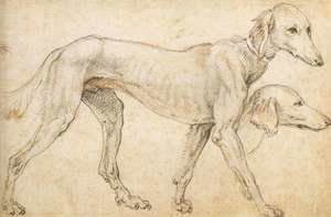 Mannerism painting reproductions: Studies of a Greyhound 1563-64