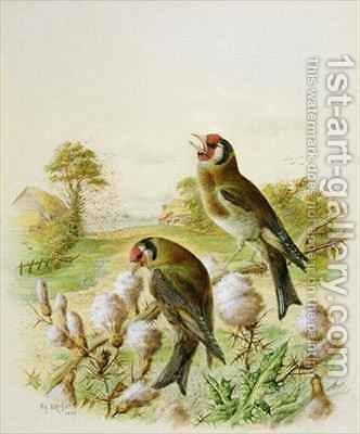 Goldfinches on thistles by Harry Bright - Reproduction Oil Painting