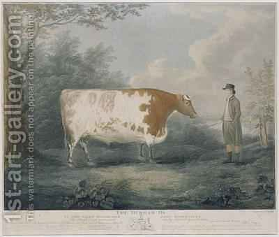 The Durham Ox by (after) Boultbee, John - Reproduction Oil Painting