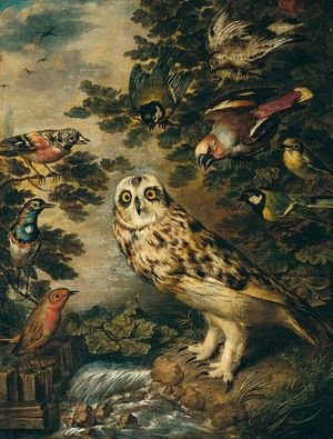 An Owl Mocked By Other Birds