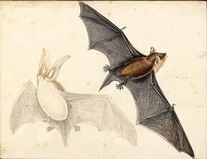 A Long-Eared Bat And A Pipistrelle