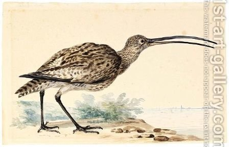A Whimbrel by Abraham Meertens - Reproduction Oil Painting