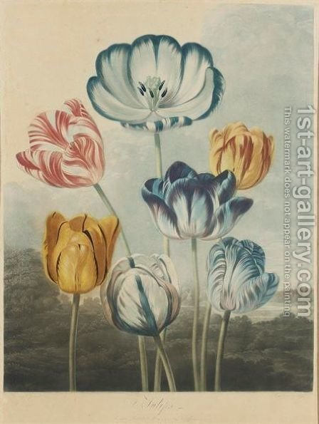 Tulips by (after) Philip Reinagle - Reproduction Oil Painting