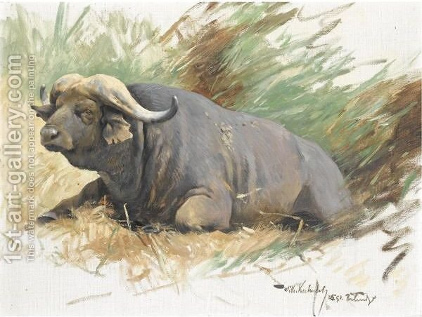 Huge version of Study Of A Buffalo