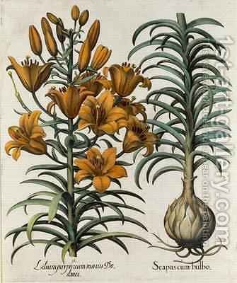 Lilium purpureum mauis Do danei and Scapus cum bulbo by (after) Besler, Basilius - Reproduction Oil Painting
