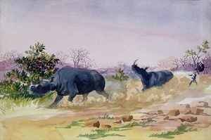 John Sawing's narrow escape from being run down by a couple of rhinoceros, north of the Makabie River