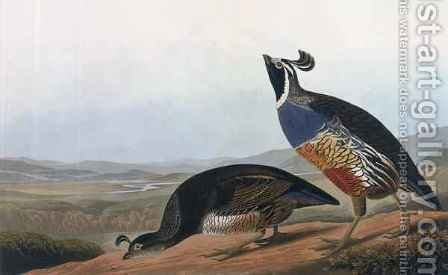 Californian Partridge, from 'Birds of America' by (after) Audubon, John James - Reproduction Oil Painting