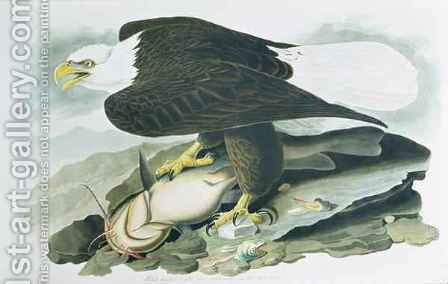 The Bald-Headed Eagle from 'Birds of America' by (after) Audubon, John James - Reproduction Oil Painting