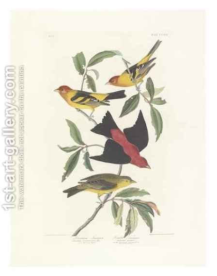 Louisiana Tanager, Scarlet Tanager by (after) Audubon, John James - Reproduction Oil Painting