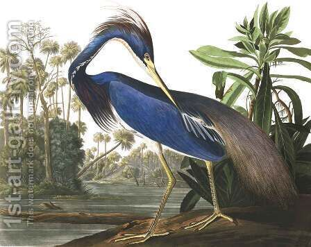 Louisiana Heron, from 'Birds of America' by (after) Audubon, John James - Reproduction Oil Painting