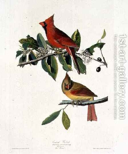 Cardinalis cardinalis (Northern Cardinal) one male and two females by (after) Audubon, John James - Reproduction Oil Painting
