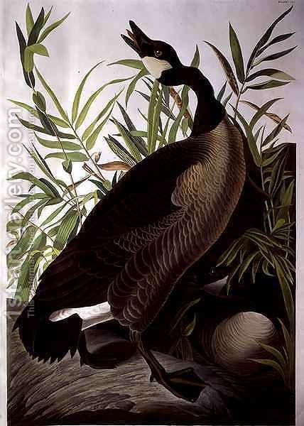 Canada Goose, from 'Birds of America' by (after) Audubon, John James - Reproduction Oil Painting