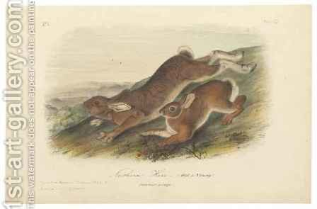 Northern Hare (Old & Young), illustration from 'The Viviparous Quadrupeds of North America' by (after) Audubon, John James - Reproduction Oil Painting