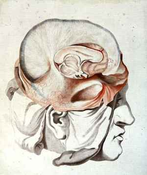 Neo-Classical painting reproductions: The Skull, from 'Traite d'Anatomie de Cerveau'
