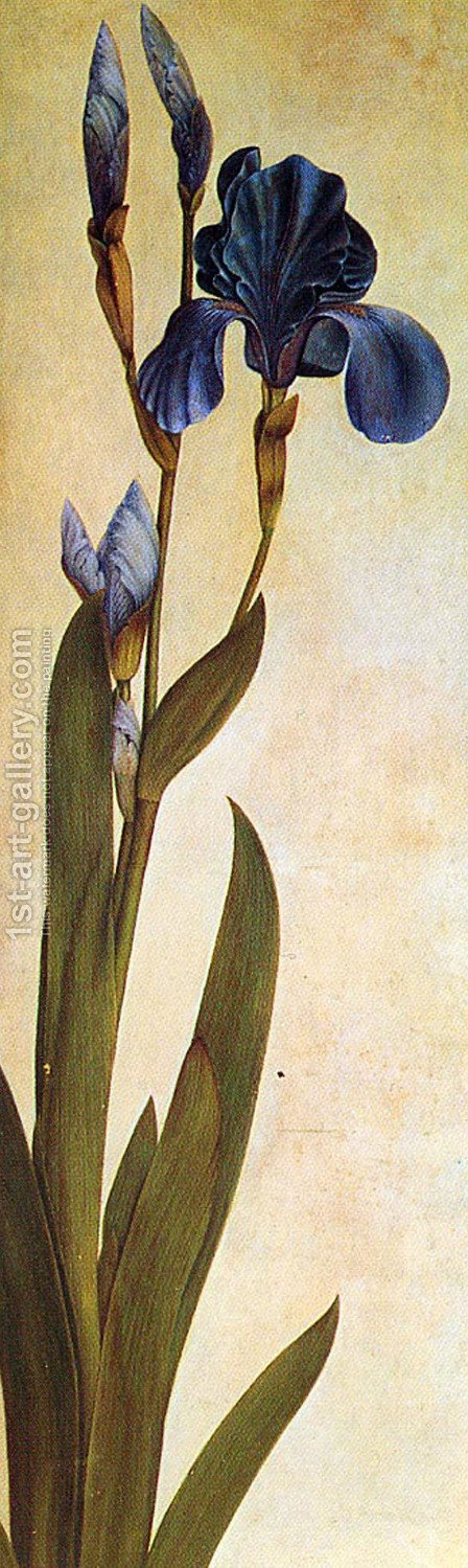 Iris Troiana by Albrecht Durer - Reproduction Oil Painting